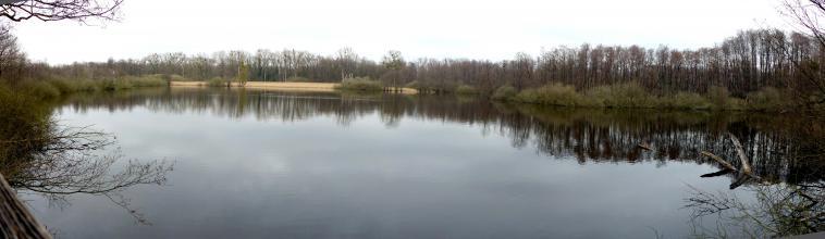 Blick auf einen länglichen See bei trübem Wetter. Das hintere Ufer wird von Schilf, Bäumen und Sträuchern gebildet.