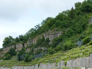 Über Rebterrassen erhebt sich ein nach rechts ansteigender, bewaldeter Berg mit links hervortretenden Felsklippen.