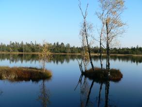 Auf dem Bild ist eine große blaue Wasserfläche zu sehen, die im Vordergrund von zwei Torfinseln unterbrochen wird. Auf der Insel rechts stehen dünne hohe Bäume, die sich im Wasser spiegeln. Im Hintergrund verläuft ein Uferstreifen mit Wald.