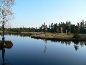 Blick auf eine weite blaue Wasserfläche, die am hinteren Ufer von Torfwiesen und Wald begrenzt wird. Im Vordergrund links spiegelt sich ein schlanker Baum im Wasser.