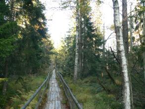 Auf dem Bild führt ein schmaler Bohlenweg mit Geländern durch eine Feuchtwiese. Neben Farngewächsen links vorne säumen auch hohe Laub- und Nadelbäume den Pfad.