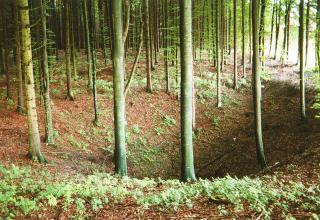 Blick auf eine schüsselförmige Bodenvertiefung in einem Wald. Zahlreiche schlanke Bäume stehen um den Rand der Vertiefung sowie im Hintergrund.