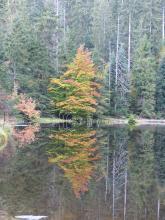 Blick auf einen fast glasklaren See, in dem sich die dicht stehenden Bäume des Ufers spiegeln.