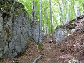 Das Bild zeigt einen schmalen Waldpfad, auf dessen linker Seite sich eine dunkelgraue, halbhohe Felswand erhebt. Rechts ist ein niedrigerer Felsblock zu sehen, davor liegt eine Böschung.