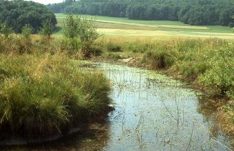 Auf dem Bild ist ein von Wasserpflanzen besiedelter schmaler Fluss zu sehen, der in einem Bogen von links hinten auf den Betrachter zukommt. Die Ufer zu beiden Seiten sind mit hohem Gras und Sträuchern bewachsen. Im Hintergrund liegen Waldgebiete.