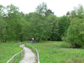 Ein mit Geländern versehener Bretterpfad führt auf diesem Bild über eine Feuchtwiese. Eine Gruppe Spaziergänger nutzt diesen Weg. Im Hintergrund sowie rechts vorne stehen verschiedene Laub- und Nadelbäume.