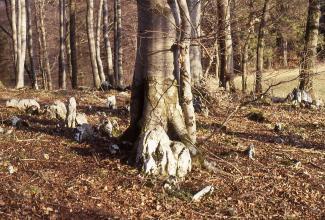 Das Bild zeigt mehrere unterschiedliche große Felsblöcke, die sich auf einem Waldboden verteilen. In der Bildmitte sowie im Hintergrund stehen schlanke, hohe Baumstämme.