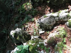 Blick von oben auf mehrere graue Felsblöcke, die auf Waldboden verstreut sind. Die Felsblöcke haben längliche oder quadratische Form und sind stark bemoost.