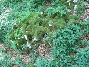 Blick von oben auf einen stark bemoosten, löchrigen Felsblock, der auf Waldboden liegt. Dichte Vegetation rahmt den Felsblock ein.