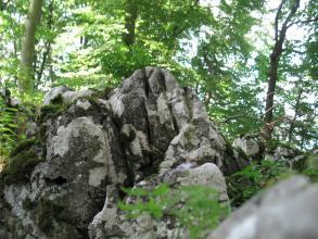 Blick auf eine hellgraue Felsengruppe mit dunkelgrauen Stellen. Die Felsen in der Mitte haben die Form von aneinanderliegenden Fingern. Im Rücken der Felsgruppe stehen hohe, belaubte Bäume.