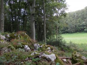 Das Bild zeigt eine von Felsblöcken übersäte, nach rechts abfallende Böschung. Dahinter steht dichter Wald. Rechts im Hintergrund erstreckt sich Grünland sowie weiterer Wald.