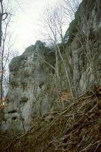 Blick auf eine nach rechts ansteigende, über Eck gehende graue Felsgruppe mit Höhlen und Nischen sowie Bäumen davor. Im Vordergrund liegen auf einem Steilhang abgebrochene Äste und Zweige.