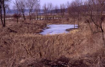 Hinter einem Erdwall im Vordergrund liegt eine kleine graue Wasserfläche. Das Grau könnte auf Vereisung hindeuten, da durchweg kahle Bäume am Ufer rund um die Wasserfläche stehen.