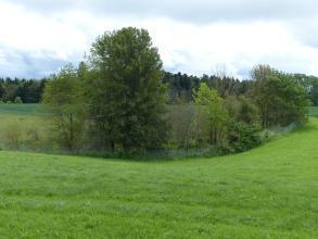 Das Foto zeigt eine wannenförmige Bodenvertiefung auf einer Wiese. Die Vertiefung ist mit Bäumen und Sträuchern bewachsen.