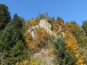 Das Foto zeigt eine bleiche, erhöht liegende Felszacke, die von dichtem Wald in herbstlichen Farben umgeben ist.