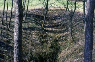 Blick auf eine zum Betrachter hin abfallende Bodenvertiefung. An den Rändern der Vertiefung stehen dünne, kahle Bäume.