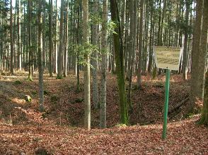 Blick auf eine trichterförmige Bodenvertiefung in einem Wald mit schlanken, hohen Bäumen. Rechts ist eine Hinweistafel aufgestellt. Der Boden von Grube und Wald ist mit braunem Laub bedeckt.