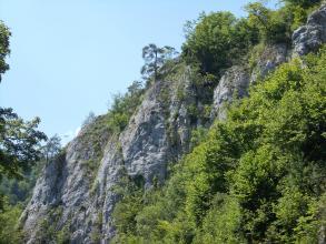 Blick auf hellgraue, steil nach rechts aufsteigende Felsklippen, die rechts von Bäumen verdeckt werden.