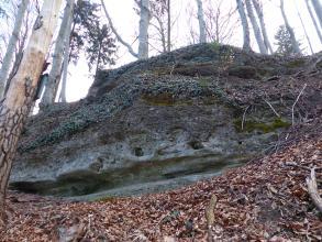 Blick auf eine längliche Felsenbank oberhalb einem mit Laub bedeckten Waldhang. Das dunkelgraue Gestein ist von Nischen und Furchen durchzogen und zudem bewachsen.
