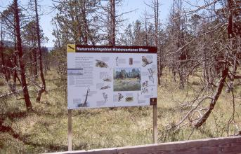 Das Bild zeigt eine Moorlandschaft mit zahlreichen Bäumen, teilweise auch abgestorbenen Exemplaren. Im Vordergrund steht eine dazugehörende Hinweistafel.