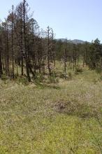 Auf einem grünen Grasteppich stehen einige Bäume. Mehrere Stämme scheinen abgestorben, da sie weder Laub noch Nadeln tragen.