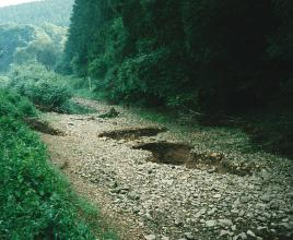 Umgeben von Gebüsch und dichtem Wald schiebt sich eine Schotterzunge dem Vordergrund entgegen, unterbrochen von einer Wasserstelle hinten links sowie löcherartigen Bodenvertiefungen mittig und rechts.