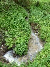Blick von oben auf einen vom oberen Bildrand kommenden, unten einen Bogen nach links beschreibenden Bach mit anschließendem Wasserfall. Die Ufer sind rundum mit Grünpflanzen bedeckt.