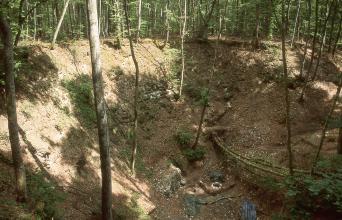 Das Bild zeigt eine steile, nach unten führende Böschung oder Senke inmitten eines überwiegend schattigen Waldes. Einzelne Bäume wachsen auch am Hang und dem Fuß der Böschung. Ein Baum ist umgestürzt.