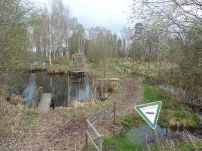 Auf dem Bild verteilen sich mehrere Wasserflächen links sowie ein kleiner Bach rechts. Ein Naturpfad führt zwischen Bach und Seen hindurch. Im Hintergrund stehen schlanke hohe Laubbäume mit weißlichen Stämmen.