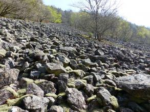 Blick auf einen nach rechts abfallenden, mit Felstrümmern und Blocksteinen bedeckten Hang. Die Halde ist im Hintergrund von Wald begrenzt.