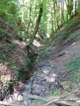 Blick in eine schattige Waldschlucht, in dessen schmaler, von Totholz bedeckter Kerbe ein dünnes Bächlein rinnt.