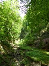 Blick in einen schmalen, bewaldeten Tobel mit felsigen Böschungen. Links fließt ein dünner Bach über mehrere Gesteinsstufen abwärts. Daneben wächst dichtes Gras.