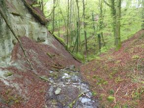 Blick in ein bewaldetes Kerbtal mit beidseitig aufsteigenden Böschungen. Die Böschung links zeigt im oberen Teil freiliegendes, blockhaftes Gestein. Im Einschnitt des Tals, im Vordergrund, steht etwas Wasser.