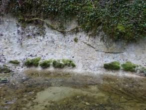 Blick auf eine steile Uferböschung entlang eines klaren Baches. Die Böschung besteht aus hellem Gestein und ist oben von Wurzeln durchzogen sowie von Sträuchern und Moos bewachsen. Unten treten mehrere grünliche Steinblöcke aus der Böschung hervor.