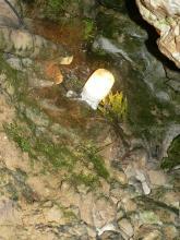 Nahaufnahme einer mit Moos bedeckten Höhlenwand. Im oberen Teil ist eine Lampe angebracht.