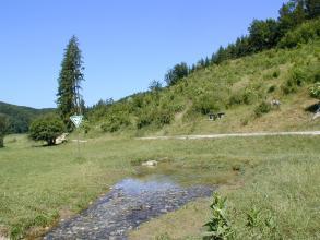 Blick auf eine kleine, teichartige Quelle inmitten einer grünen Wiese. Die Quelle, die zum Vordergrund hin als Bach weiterfließt, ist durch einen Fahrweg von einem bewaldeten, nach rechts ansteigenden Hügel abgegrenzt.