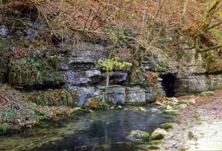 Unter einer stark bewachsenen, nach rechts abfallenden Böschung stehen graublaue Felsen an, in denen sich rechts eine kleinere Höhle gebildet hat. Ein schmaler Bach fließt daraus und über dunklem Grund auf den Betrachter zu.