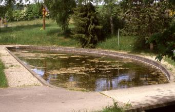 Das Bild zeigt ein tropfenförmiges, in Stein gefasstes Wasserbecken vor einer mit Bäumen bestandenen, flachen Böschung. Das Wasser ist teilweise mit Schlick bedeckt.
