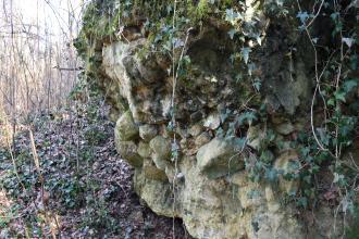 Seitlicher Blick auf eine rechts aufragende, knollige und hellbraune Gesteinswand, die halb von herabhängenden Pflanzen überdeckt wird. Links ist ein mit Laub bedeckter Hang sowie angrenzender Wald erkennbar.