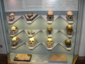 Das Bild zeigt eine große Glasvitrine, in der mehrere Totenschädel, ein Unterkiefer und zwei Kieferstücke sowie Gesteins- und Sandproben ausgestellt sind.