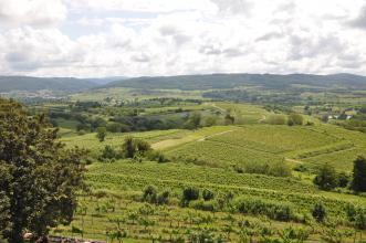 Blick von erhöhtem Standort über eine von Weinbauterrassen überzogene Hügellandschaft. Im Hintergrund sind bewaldete Berge zu erkennen.