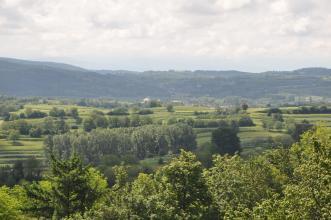 Blick von erhöhtem Standort über Baumspitzen auf terrassierte Rebanlagen. Im Hintergrund erheben sich, deutlich abgegrenzt, bewaldete Hügel und Berge.