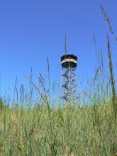 Hinter hochstehenden Grünpflanzen ist ein Aussichtsturm erkennbar. Das Turmgerüst ist offen, innen führt eine Treppe hinauf zur überdachten Kanzel.