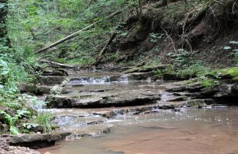 Blick auf einen durch mehrere flache Gesteinsbänke unterbrochenen Wasserlauf.