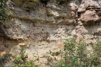 Seitlicher Blick auf eine zerfurchte, gelbliche bis rötliche Gesteinswand. Auffällig ist rechts oben ein nasenartiger Auswuchs. Im Vordergrund stehen Grünpflanzen.