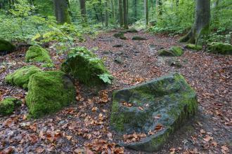 Auf einem breiten, mit Laub bedeckten Waldweg liegen mehrere, im Vordergrund größere Stein- oder Felsblöcke. Die Blöcke sind mit Moos überzogen.
