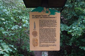 """Zwischen Bäumen und Sträuchern steht eine hölzerne Schautafel. Thema der Schautafel sind """"Fossilien am Katzenbuckel""""."""