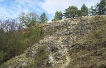 Das Bild zeigt einen felsigen, nach rechts ansteigenden Hang, der oben und links mit Bäumen bestanden ist.