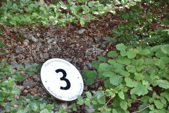 Nahaufnahme von mit Pflanzenresten vermischtem feinkörnigem Gesteinsschutt. Der Schutt ist teils von belaubten Ästen überdeckt. Links ist eine Hinweistafel mit einer Zahl angebracht.