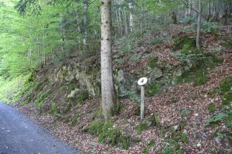 Blick auf einen nach rechts aufsteigenden Waldhang. Der Hang ist mit zahlreichen bemoosten Felsen durchsetzt. Die Felsen bilden am Hanganfang eine Linie und steigen rechts mit dem Hang aufwärts. Unten steht eine Hinweistafel neben einem Baum.